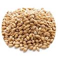 オオムギ種子発酵エキスk